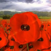 Lest We Forget – I prepared this short 3D animated video to commemorate Remembrance Day 2012